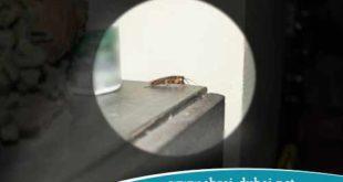 ابعاد-الحشرات-عن-المنزل