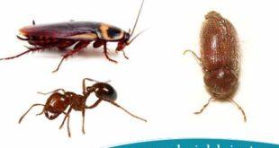 القضاء علي-الحشرات-الزاحفة